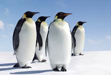 Linux下如何删除文件名乱码的文件